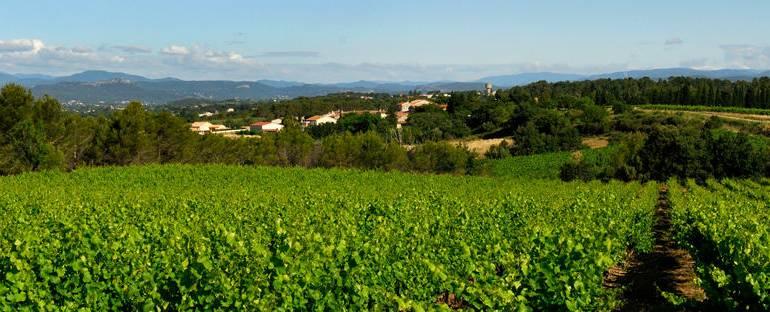 Producer Focus – Domaine du Grand Chemin, Languedoc Roussillon